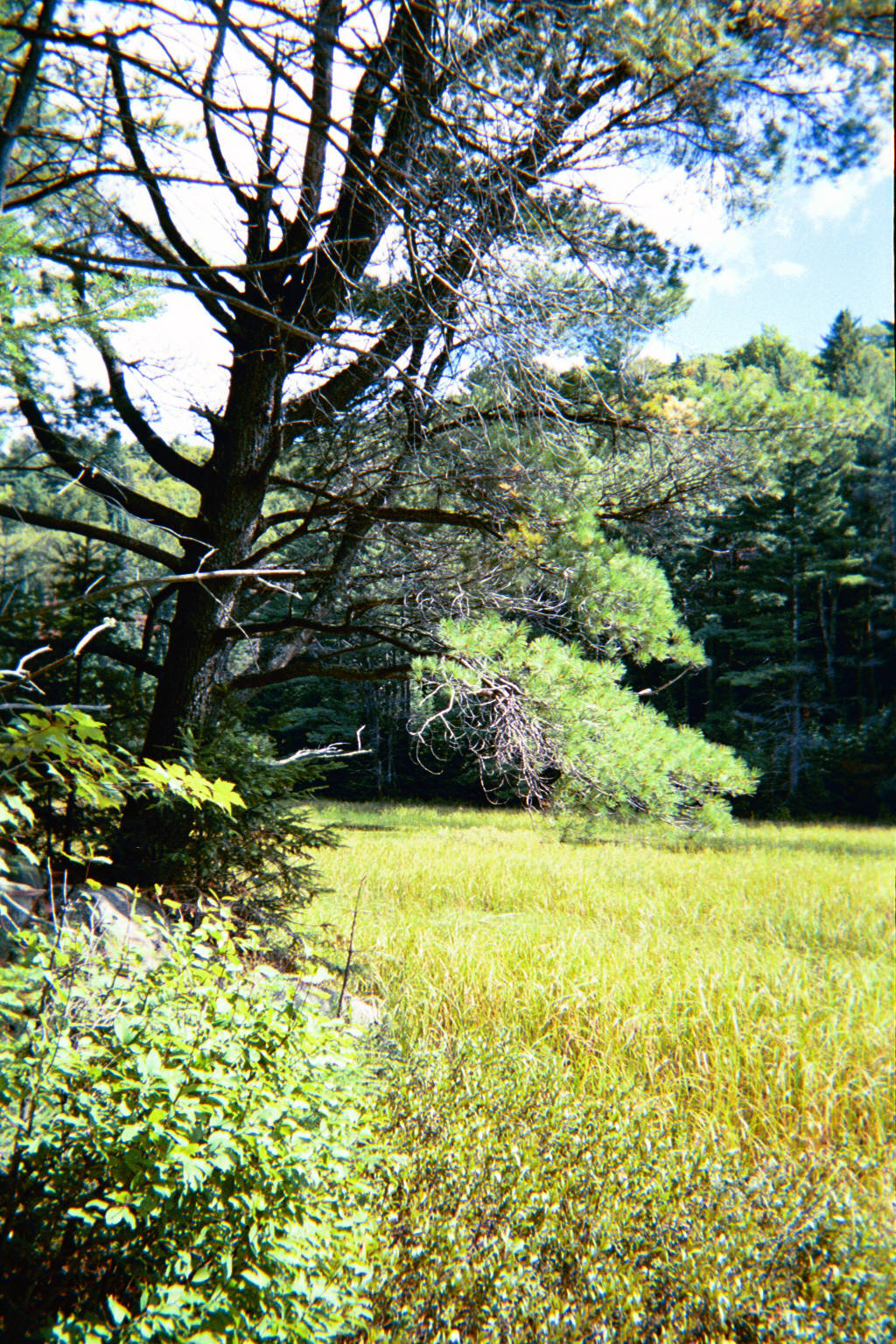 beaver-marsh-near-mizzy-lake-trailhead - www.eastpole.ca..